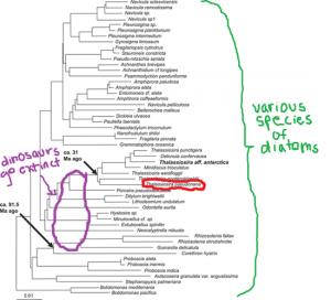 diatom evolution
